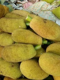Farm Fresh Raw Jackfruit