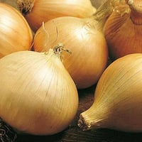 Brown Color Nutritious Onion