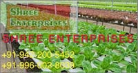 Aquaponics Growing System with Greenhouse
