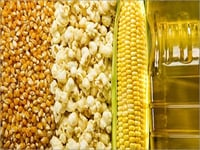 Corn Products(Corn Grit,Corn Rawa,Corn Flour)