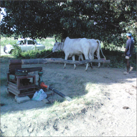 Cattle Powered Agriculture / Irrigation Pumps