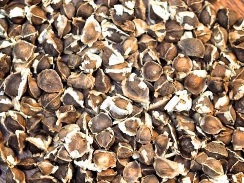Natural Herbal Moringa Seeds