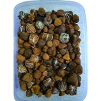 100 % Pure OX Gallstone