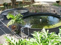 Fish Farming Project Development Consultancy Services