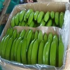 Green Color Cavendish Banana