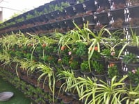 Vertical Gardens Green Walls