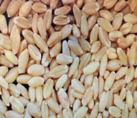 High Protein Natural Wheat