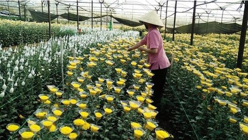 Agricultural Greenhouse Consultant Services