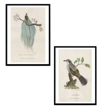 Vintage Bird Engraving Painting With Frames