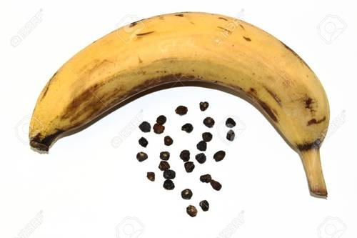High Grade Banana Seeds