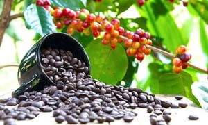 Natural Brown Coffee Beans