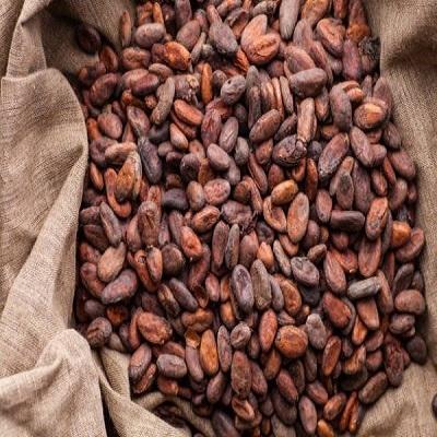 Dried Organic Cocoa Bean