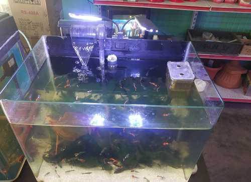 Fish Tanks In Chennai Fish Tanks Dealers Traders In Chennai Tamil Nadu