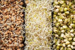 High In Protein Mixed Sprouts