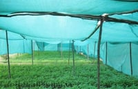 Green Outdoor Agro Shade Nets