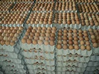 Fresh Poultry Brown Table Eggs