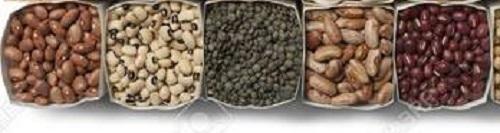 Indian Origin Kidney Beans At Price 900 Usd Metric Ton In New Delhi Kishan Lal Enterprises