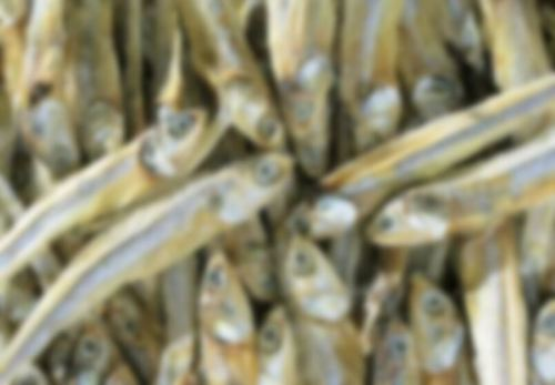 Frozen Dried Anchovy Fish