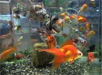 Fish Aquarium For Residential and Commercial
