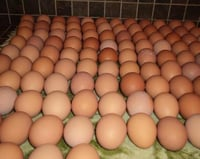 Fresh White And Brown Table Eggs