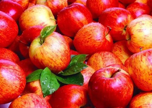 Farm Fresh Red Apple