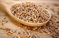Brown Wheat Seeds for Food