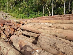 Cameroon Tali Wood With High Durability