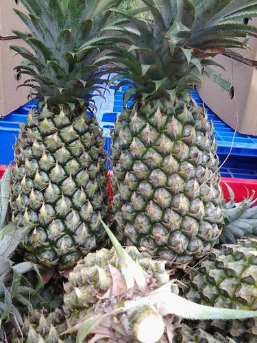 Vietnam Impurity Free Pineapple
