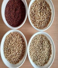 Mandi Rate Lokwan Wheat Grain