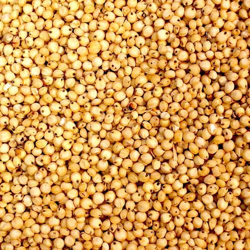 100% Natural Sorghum Grains