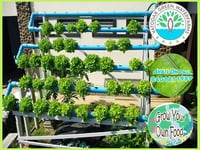 Outdoor Wall Hydroponics System