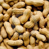 Impurity Free Shelled Groundnuts