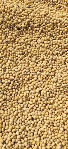 Dried And Cleaned Soya Beans