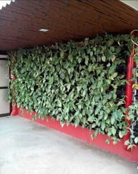 Agro Experts Green Walls or Vertical Walls