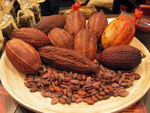 Good Taste Cocoa Bean
