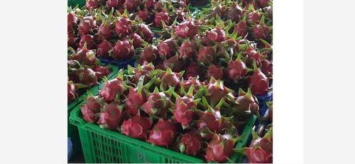 Fresh Dragon Fruit With 90% Maturity