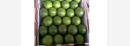 Green Color Fresh Lime