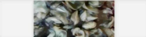 Frozen Ocean Cuttlefish Skin