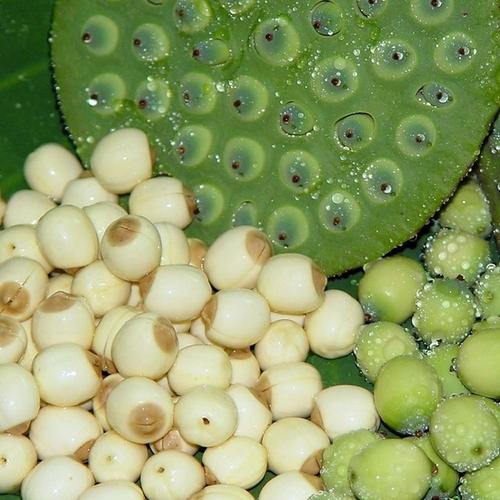 Organic Lotus Seeds With 12% Max Moisture