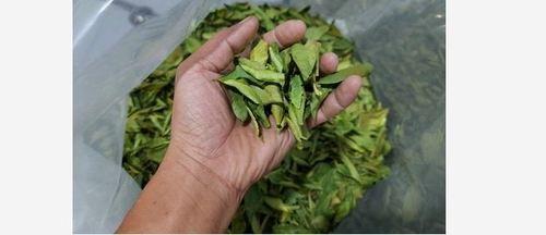 Dried Green Lemon Leaf