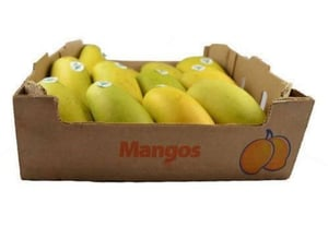 Mango Packaging Export Boxes