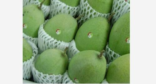 Green Color Fresh Mango