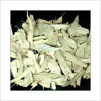 Dried Green Eucalyptus Leaves