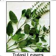 Tulasi Leaves