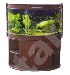 Semi Circular Square Type Aquariums
