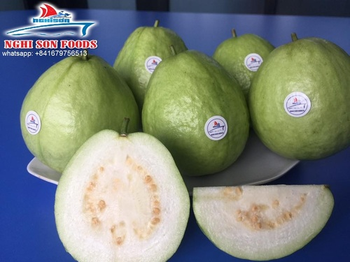 Fresh Guava With The Best Price