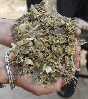 Best Quality Corn Silage