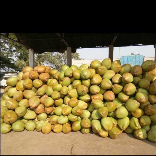 Tender Coconut In Pollachi, Tender Coconut Dealers & Traders