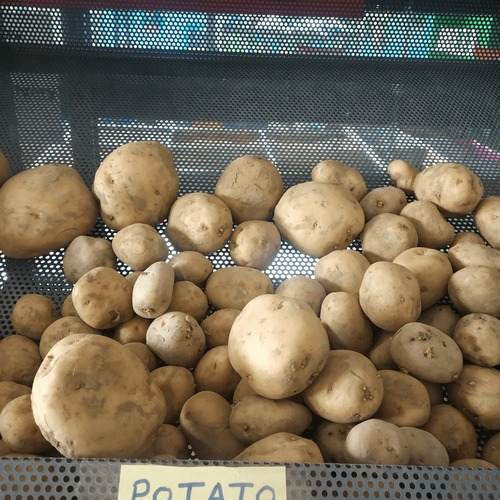 Fresh Premium Quality Potato