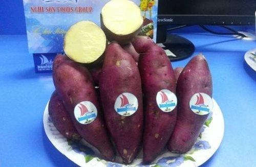 Fresh Japanese Sweet Potato